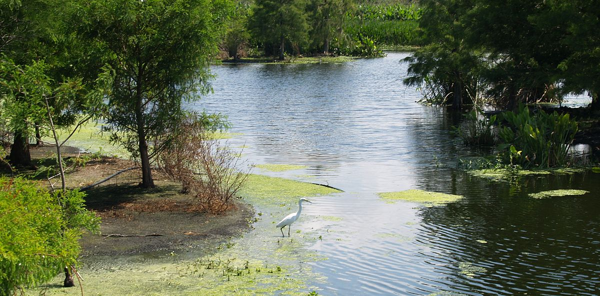 Green Cay Wetlands Wikipedia