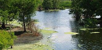 Green Cay Wetlands - Green Cay Wetlands, great egret