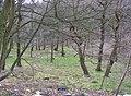 Grimescar Wood, Fixby - geograph.org.uk - 382158.jpg