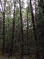 Gwaii Haanas National Park (26945758693).jpg