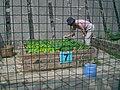 HK Sunday Wan Chai Park Gardening 7.JPG