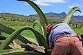 Hacienda pulquera - Tlaxcala - panoramio (6).jpg