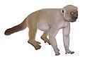 Hadropithecus stenognathus.jpg