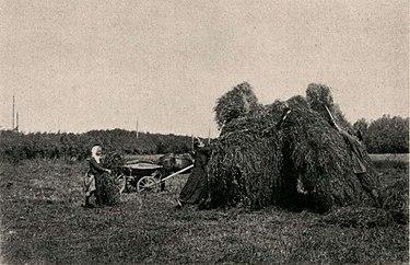 Сушка клевера на хуторе Константина Фалена (из книги П.В.Халютина «Крестьянское хозяйство в России», 1915)
