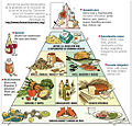 Harvard food pyramid es.jpg