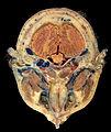 Head Plastination - Transverse Section.jpg