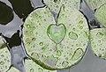 Heart - panoramio (1).jpg
