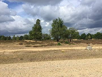 Heide 2018 1.jpg