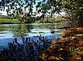 Herbststimmung an der Fulda (Bad Hersfeld) 2007 - panoramio.jpg