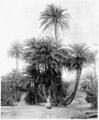 Hetzel Magasin1903 d257 Ksour et Oasis 2.png