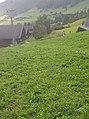 Highlands in Austria.jpg