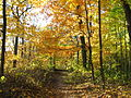 Hiking trails in Brown county State park.JPG
