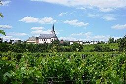 Ansicht der Stadt Hochheim am Main vom Sandweg über die Weinberge