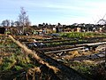 Hoole Allotments, Chester - geograph.org.uk - 638584.jpg