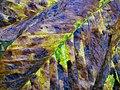 Horse Chestnut leaf in autumn 2.JPG