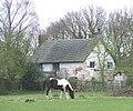 Horse Grazing, near Codsall, Staffordshire - geograph.org.uk - 396323.jpg