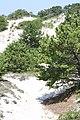 Horseneck Beach State Reservation - Westport, MA - panoramio (18).jpg