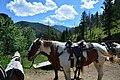 Horses for riding at Absaroka Mountain Lodge.jpg