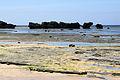 Hoshizuna-no-hama Iriomote Island06bs3s4200.jpg