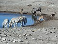 Hot Watering Hole Action.jpg
