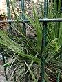 IMG Natural plant pic.jpg