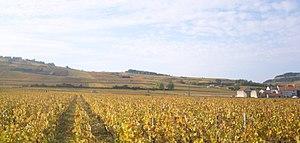 Pommard wine - Vineyards around Pommard.