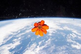 Plants in space - Wikipedia