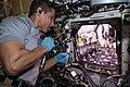 ISS-64 Hopkins examines radish bulbs.jpg
