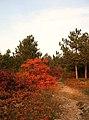I colori del Carso - panoramio (1).jpg