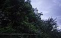 Ilha das Flores P5290344 (35621056990).jpg