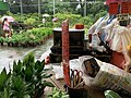 In a potted plant store in Taichung.jpg