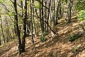 In bosck - panoramio (1).jpg