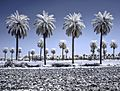Infrared PhotoGraphy By Ramin Kavand (1).jpg