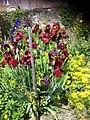 Iris rouges et violets.jpg
