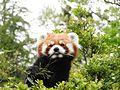 Ishikawa Zoo - Animals - 42 - 2016-04-22.jpg