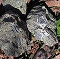 Ison Creek Kimberlite (Elliott County Peridotite, Late Cretaceous, 75 Ma; west of Stephens, Elliott County, Kentucky, USA) 18 (48383211507).jpg