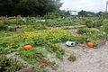 Jardin Ile aux idées IleTudy104.JPG