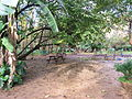 Jardin d'essais alger (1).JPG