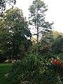 Jardin des Plantes de Poitiers 07.jpg
