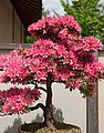 Jardin japonais (528792229).jpg