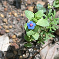 Jarrahdale Flower 12.jpg