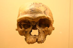 Jebel Irhoud - Irhoud 1, approx. 160,000 yrs old, Smithsonian Natural History Museum
