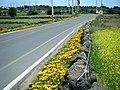 Jeju island road - panoramio.jpg
