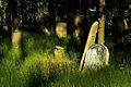 Jewish cemetery Otwock 10761387.jpg