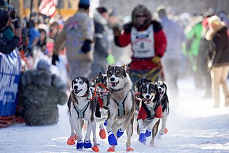 John Beargrease Dog Sled Race - Image: John Beargrease Dogsled Marathon Two Harbors Minnesota (32708009705)