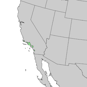 Juglans californica - Image: Juglans californica range map 2