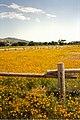 June wildflowers (5823712889).jpg