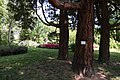 Kámoni Arborétum Szombathely Kamon Arboretum Park 06.jpg
