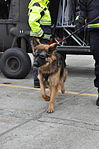 K9s train with Rhode Island National Guard 150320-A-FR455-228.jpg