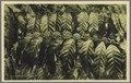 KITLV - 33457 - Kurkdjian, N.V. Photografisch Atelier - Soerabaja - Robusta coffee in Java - circa 1920.tif